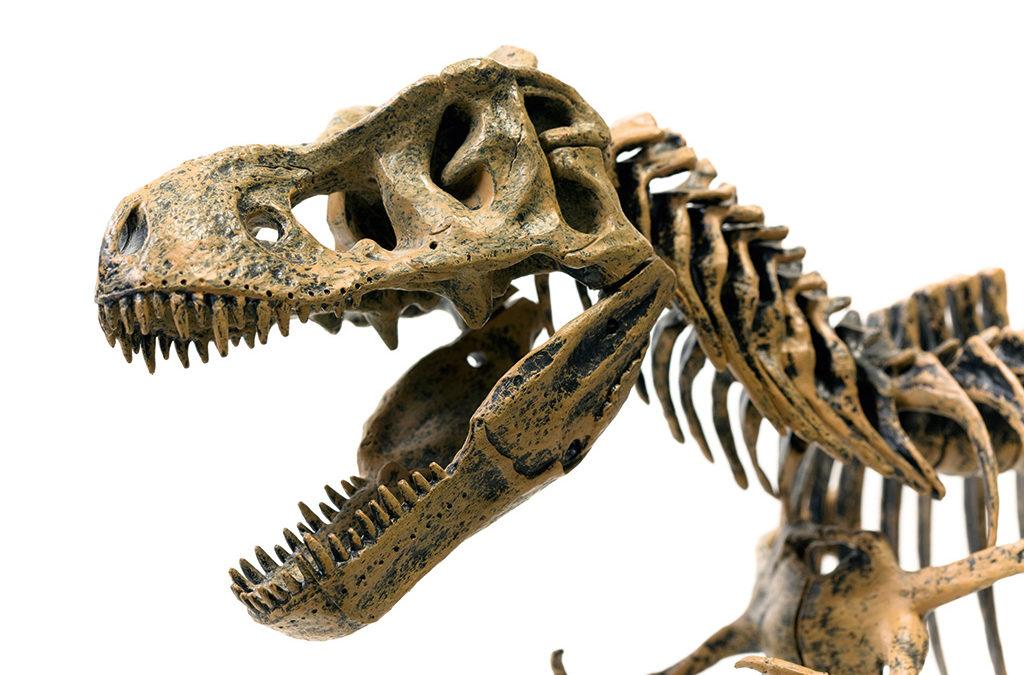 Oldest dinosaur nest discovered in Golden Gate